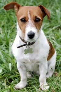 Tarjolla ilmaista herkkua koiralle