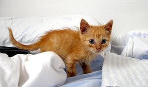 Kylläinen kissanpoika ei mökötä